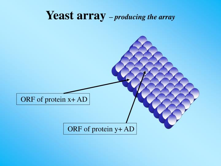 ORF of protein x+ AD