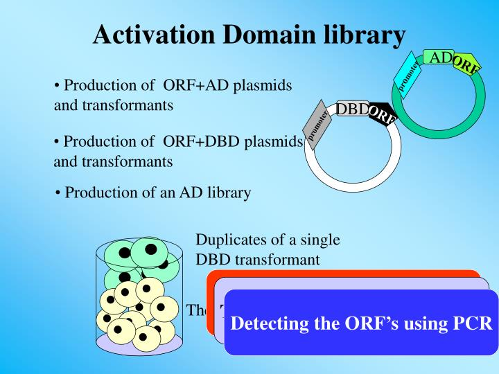 Production of  ORF+AD plasmids                           and transformants