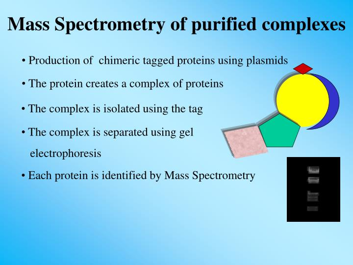 Production of  chimeric tagged proteins using plasmids