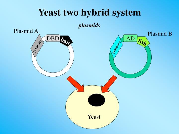 Plasmid A