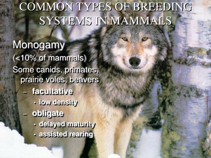COMMON TYPES OF BREEDING SYSTEMS IN MAMMALS