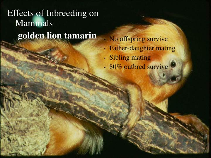 Effects of Inbreeding on Mammals