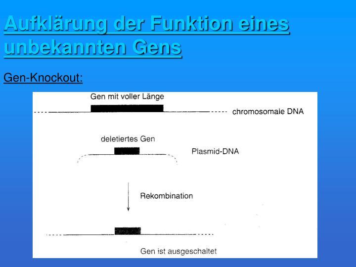 Aufklärung der Funktion eines unbekannten Gens