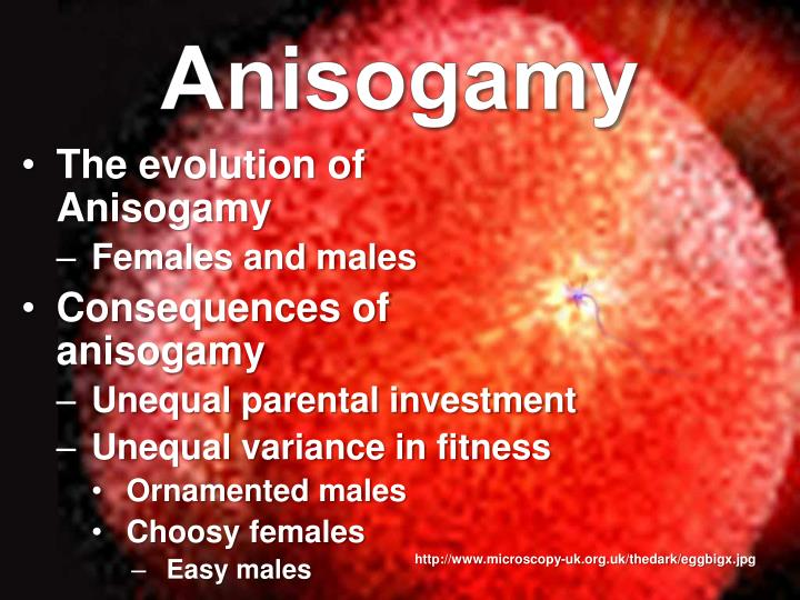 Anisogamy