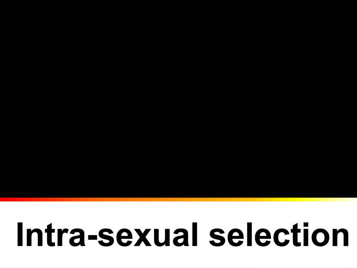 Intra-sexual selection