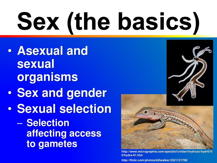 Sex (the basics)