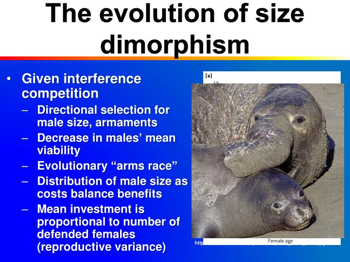 The evolution of size dimorphism