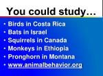 you could study