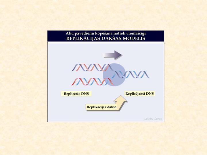 Replicējamā DNS