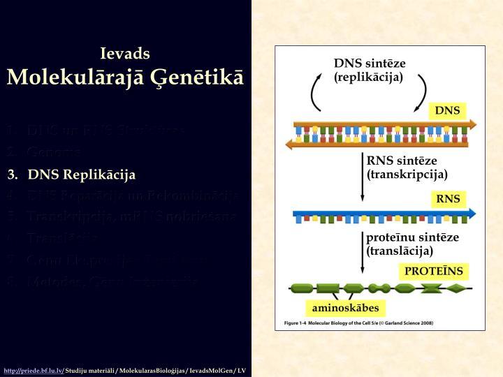DNS sintēze
