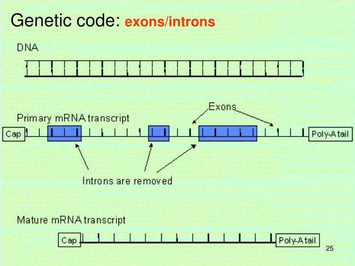 Genetic code: