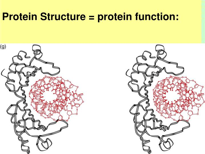 Protein Structure = protein function: