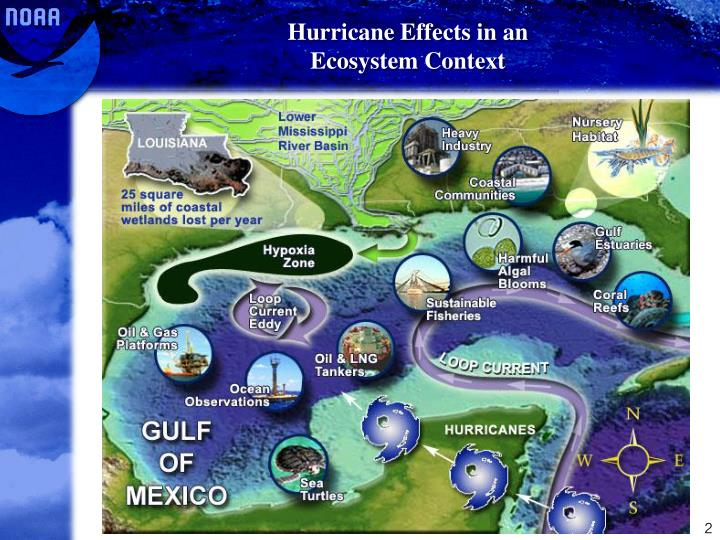 Hurricane effects in an ecosystem context