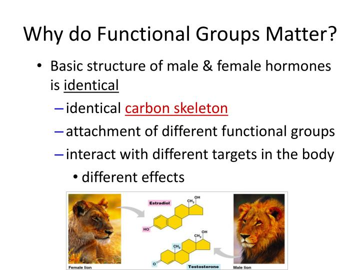 Why do Functional Groups Matter?