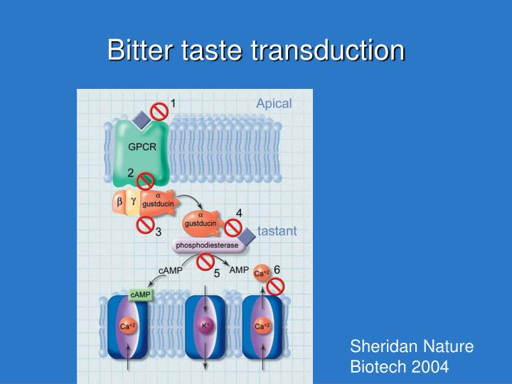 Bitter taste transduction