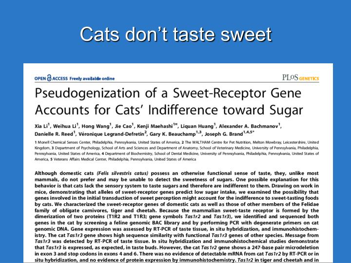 Cats don't taste sweet