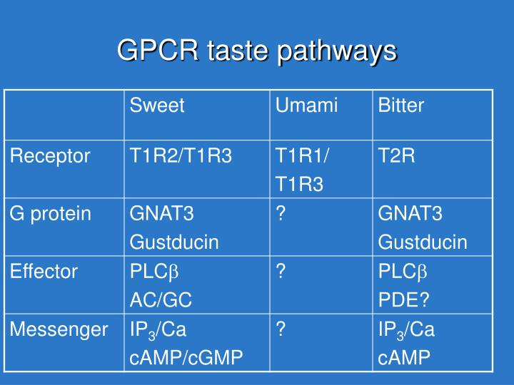 GPCR taste pathways