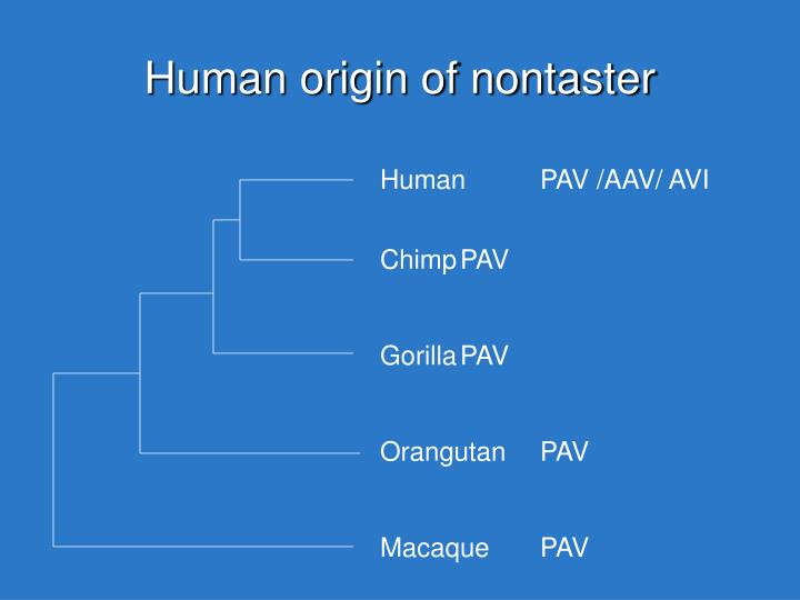 Human origin of nontaster
