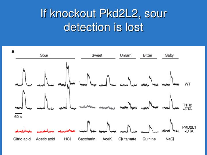 If knockout Pkd2L2, sour detection is lost