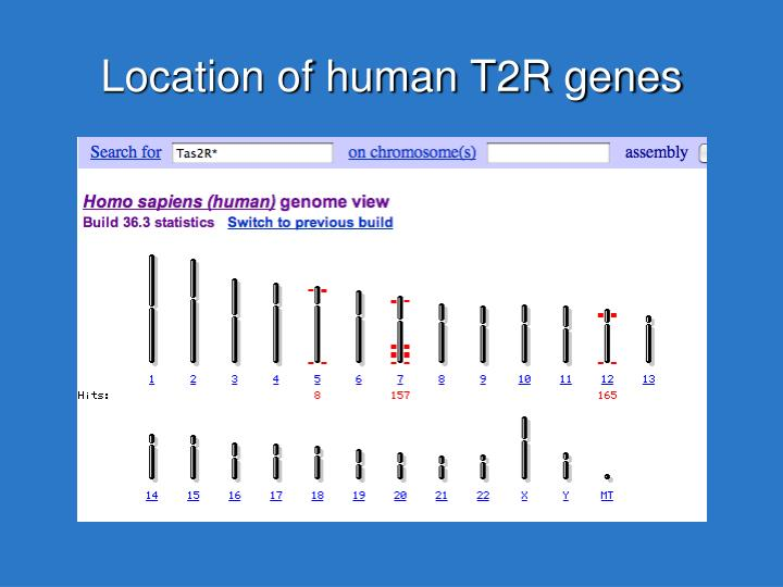 Location of human T2R genes