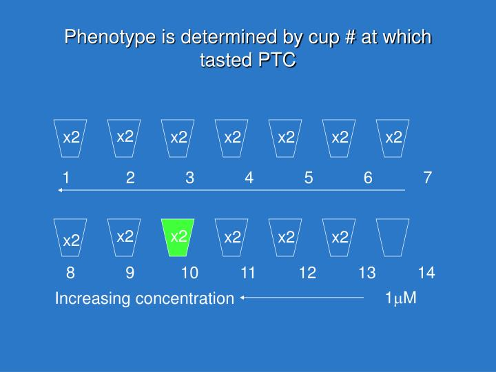Phenotype is determined by cup # at which tasted PTC