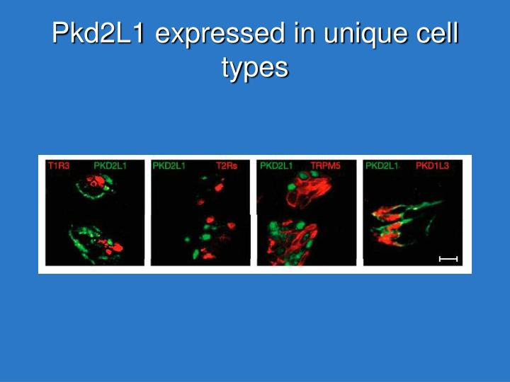 Pkd2L1 expressed in unique cell types