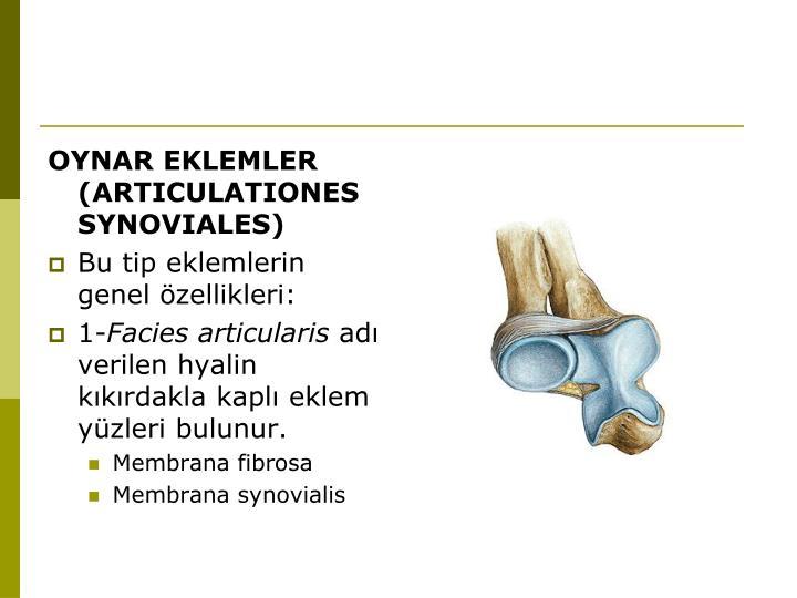 OYNAR EKLEMLER (ARTICULATIONES SYNOVIALES)