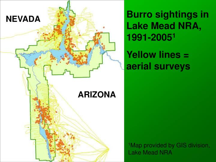 Burro sightings in Lake Mead NRA, 1991-2005