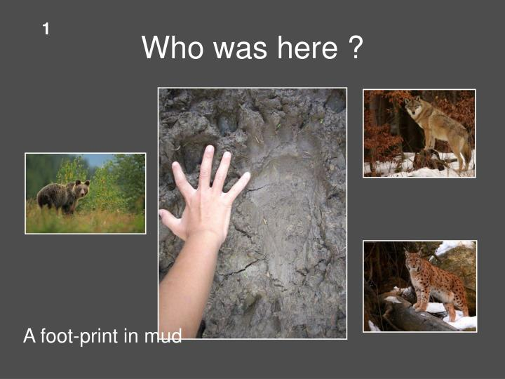 Who was here ?
