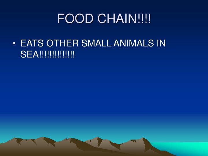 FOOD CHAIN!!!!