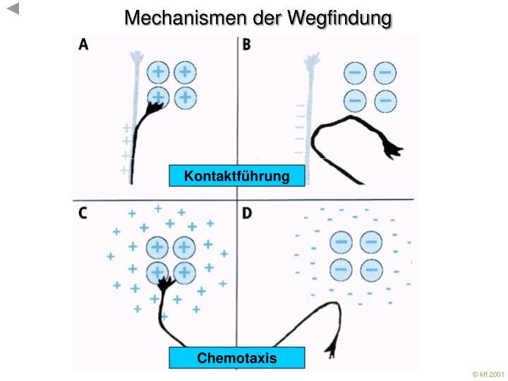 Mechanismen der Wegfindung