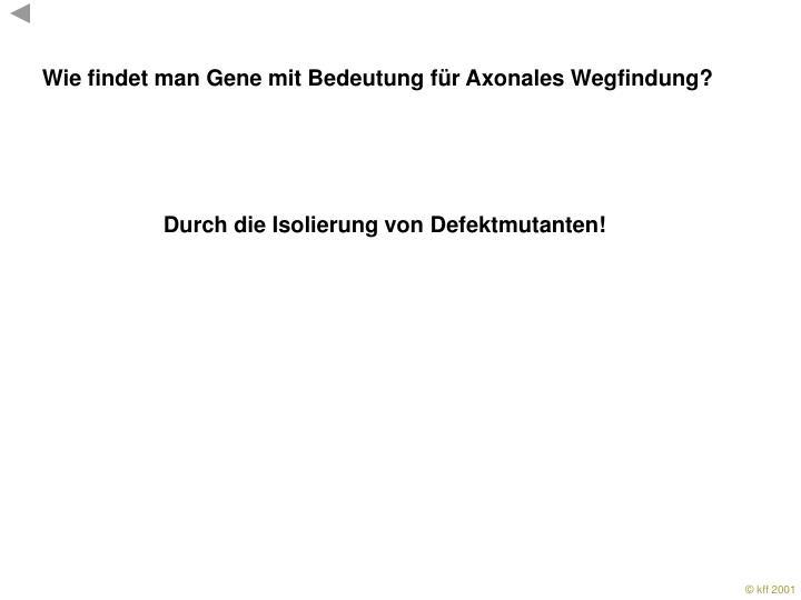 Wie findet man Gene mit Bedeutung für Axonales Wegfindung?