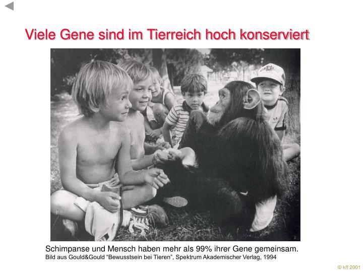 Viele Gene sind im Tierreich hoch konserviert