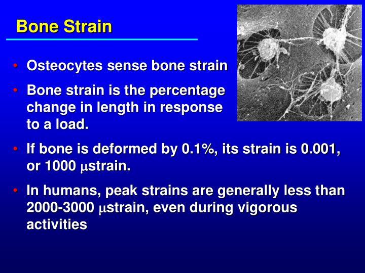 Bone Strain