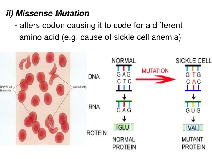 ii) Missense Mutation