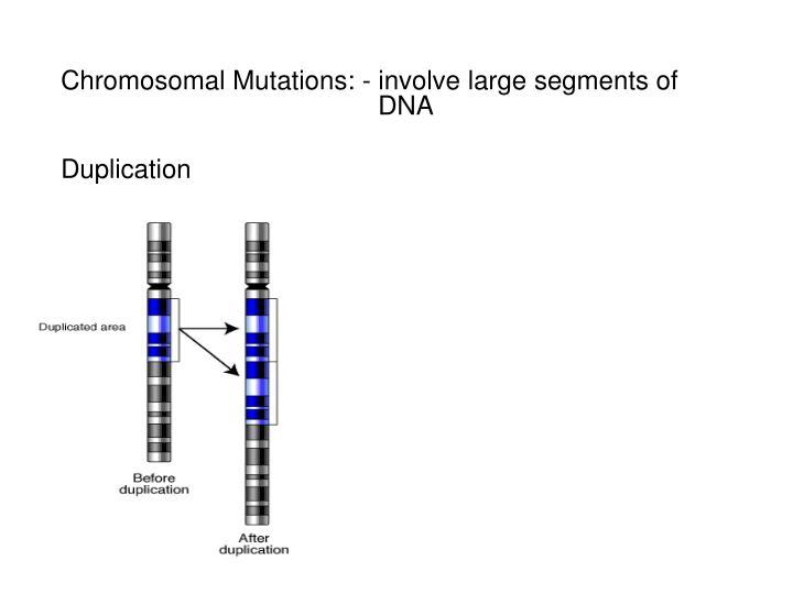 Chromosomal Mutations: - involve large segments of DNA