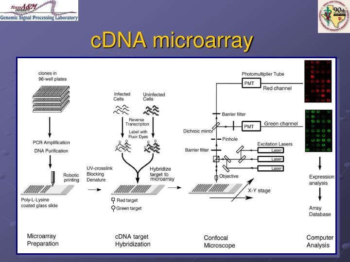 cDNA microarray