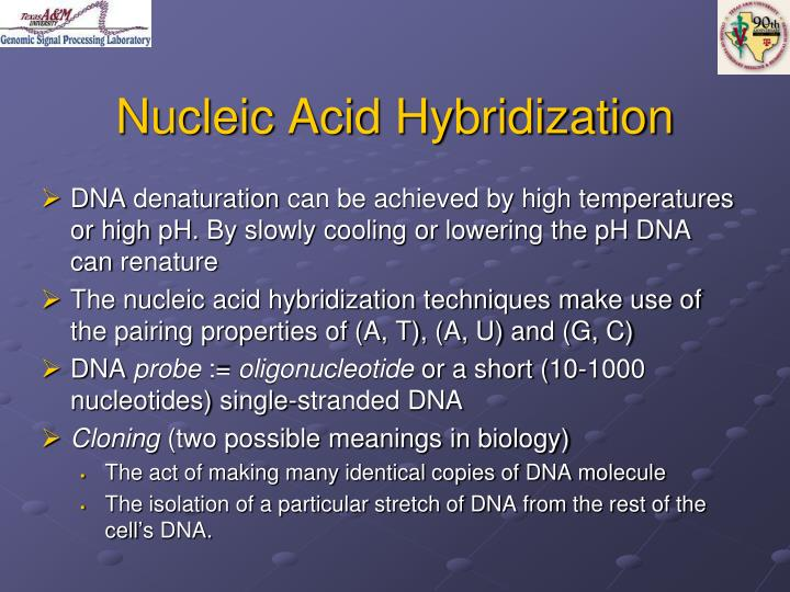 Nucleic Acid Hybridization