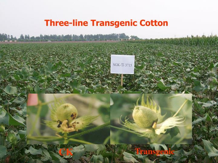 Three-line Transgenic Cotton