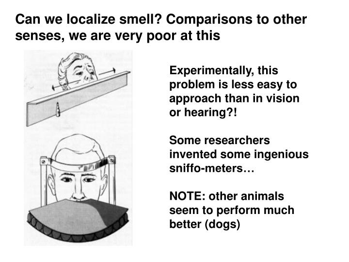 Can we localize smell? Comparisons to other senses, we are very poor at this