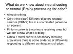 what do we know about neural coding or central brain processing for odor