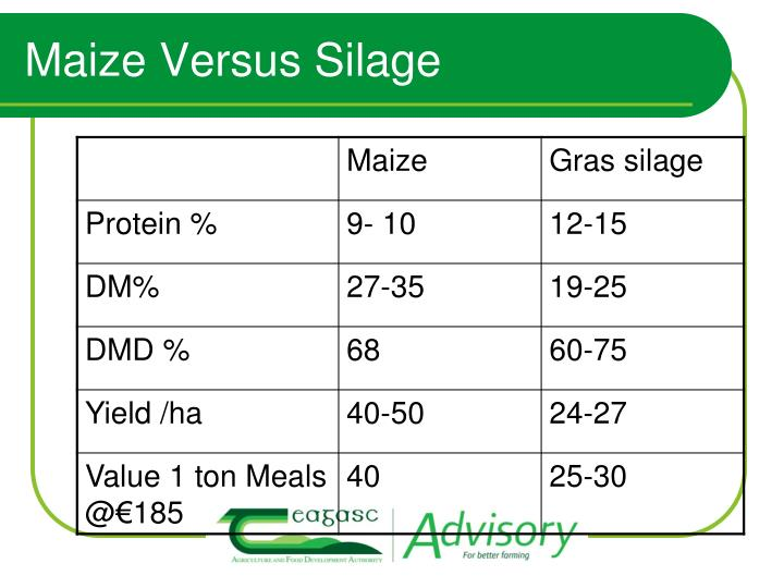 Maize Versus Silage
