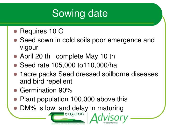 Sowing date