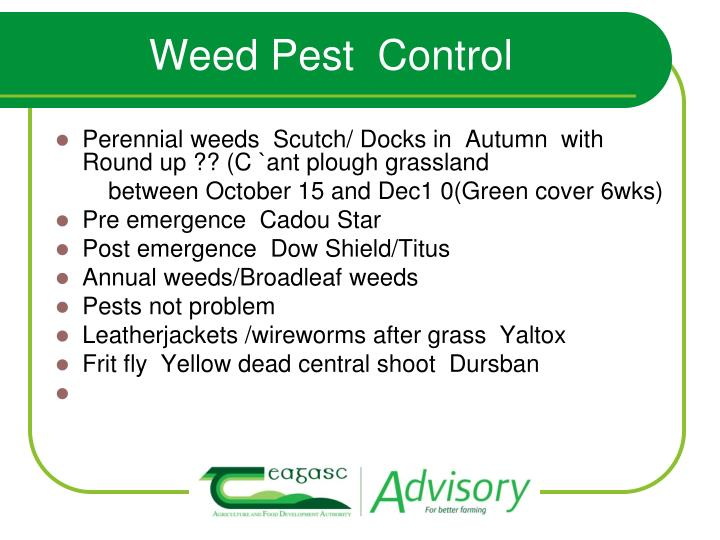 Weed Pest  Control