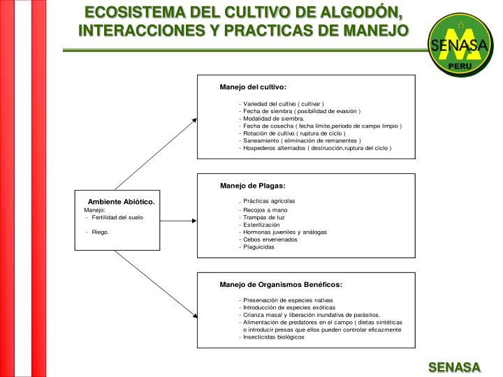 ECOSISTEMA DEL CULTIVO DE ALGODÓN,