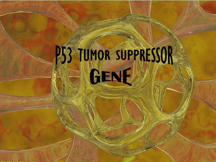 P53 TUMOR SUPPRESSOR