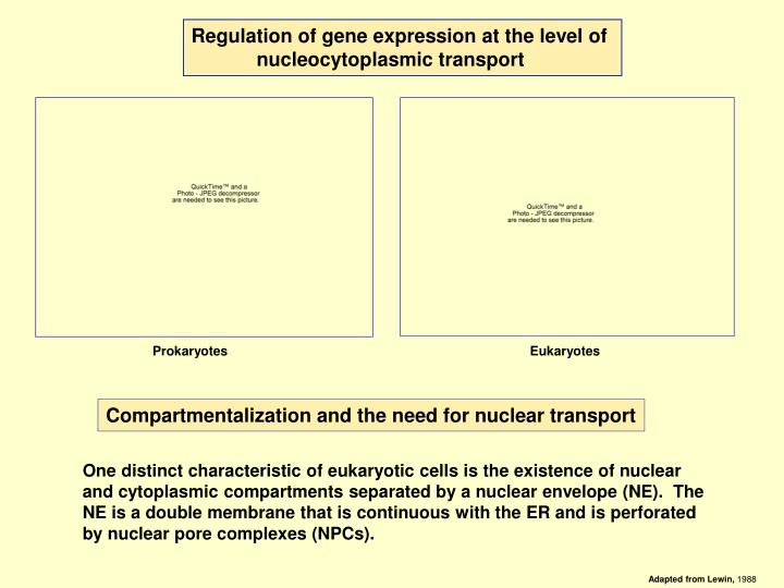 Regulation of gene expression at the level of