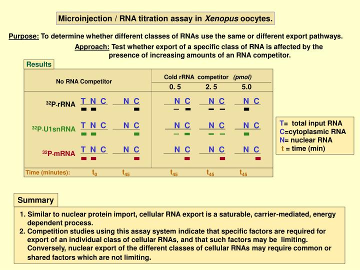 Microinjection / RNA titration assay in