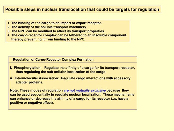 Possible steps in nuclear translocation that could be targets for regulation