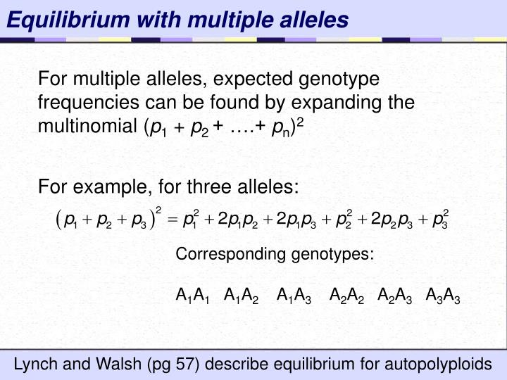 Equilibrium with multiple alleles